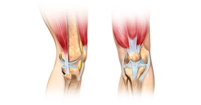 ligaments tendons