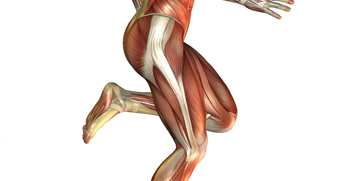 Tensor Fascia Latae And The Iliotibial Band